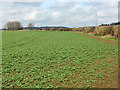 SP5808 : Crops near Forest Hill by Stephen Craven