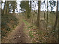 SJ7500 : Bridleway in the coppice at Cotsbrook by Richard Law