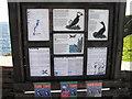 HU4008 : Information Board, near Sumburgh Head by Robbie