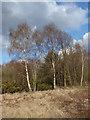 SU9765 : Chobham Common by Alan Hunt