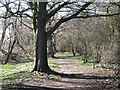 NY9864 : Riverbank footpath west of West Green by Mike Quinn