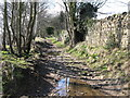 NY9864 : Riverbank footpath east of Corbridge Mill by Mike Quinn