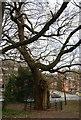 TQ5839 : Princess Anne's Oak, Tunbridge Wells Common by N Chadwick
