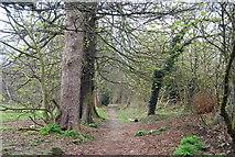 TQ5838 : Strange's Grove, Tunbridge Wells Common by N Chadwick