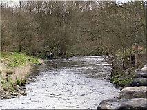 SD7915 : River Irwell at Brooksbottoms by David Dixon