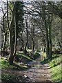 NY9864 : Riverbank footpath east of Corbridge Mill (2) by Mike Quinn