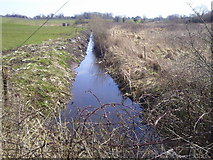 R3675 : Drainage Ditch, Co Clare by C O'Flanagan