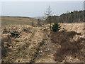 SS8793 : Forestry track on the north side of Mynydd Pwll-yr-Iwrch by eswales