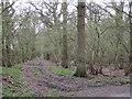 SP2272 : Perimeter ride in Manor Wood by Robin Stott