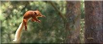 NH9718 : Alert 'RED' ! by Graeme Macklin