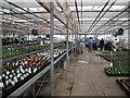 SP3275 : Leasowes Garden Nursery by Robin Stott