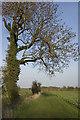TA0349 : Watton footpath by Paul Harrop