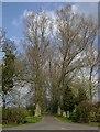 SP2642 : Entrance drive to Honington Fields by David P Howard