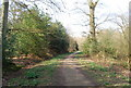 TQ6940 : High Weald Landscape Trail through Sprivers Wood by N Chadwick
