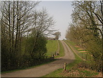 TQ7033 : Farm road to Chicken Sheds by David Anstiss