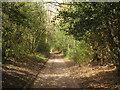 TQ6934 : Footpath towards Mopes Den by David Anstiss