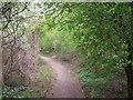 SD8605 : Path through Alkrington Woods by David Dixon