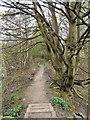 SD8505 : Path Between Lodges by David Dixon