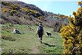 SW7925 : Lestowder Cliff by Trevor Harris