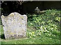 SU2140 : Primroses, St Andrew's Churchyard by Maigheach-gheal