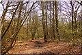 SP8506 : Trail through the wood by Steve Daniels