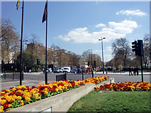 TQ2780 : Flowerbed, Marble Arch, London W1 by Christine Matthews