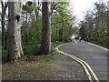 D3806 : Roadway, Carnfunnock by Kenneth  Allen