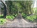 ST6963 : Twelve O'Clock Lane looking South by James Ayres
