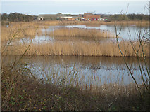 TA0623 : Reedbeds at Barrow Haven by David Wright