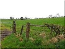 H5366 : Laragh Townland by Kenneth  Allen
