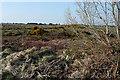R1874 : Scrubland at Slievealoughaun by Graham Horn