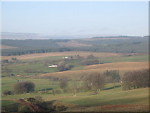 NY5676 : Pastures and woodland between Park Head and Stockastead by Mike Quinn