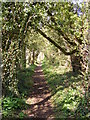 TM3977 : Footpath to New Reach & River Lane by Geographer
