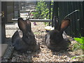 TQ4714 : Giant Rabbits  by Oast House Archive
