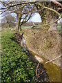 TM3666 : Ditch next to the footpath to Rotten End by Adrian Cable