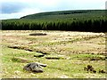 NT9720 : Sheepfold east of Threestoneburn House by Andrew Curtis