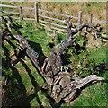NM7815 : Ardmaddy Wishing Tree by Patrick Mackie
