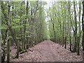 SU9790 : Jordans: Birchland Wood by Nigel Cox