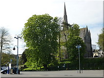 SX9164 : Chestnut trees, Lymington Road car park, Torquay by Tom Jolliffe