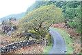 SH6442 : The Road to Croesor, Rhyd, Gwynedd by Peter Trimming