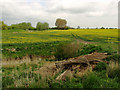 TA0653 : Rapeseed  Field north of Corpslanding by Andy Beecroft