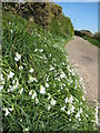 SW4538 : Vergeside flowers by Philip Halling