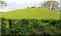 J3268 : Cattle and drumlin, Ballynahatty, Belfast by Albert Bridge