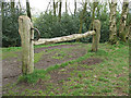 SJ8677 : Isolated fenceposts in Clock House Wood by Stephen Craven