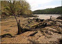 SX8752 : Boat remains, Old Mill Creek by Derek Harper