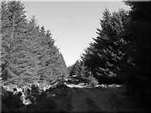 NR8460 : Forest road junction by Richard Webb