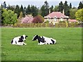 NZ2177 : Two black and white cows by David Clark