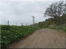 NT8754 : Farm track near the weir by James Denham