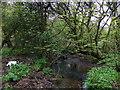 SM9632 : Nant-y-bugail at Trecwn by ceridwen