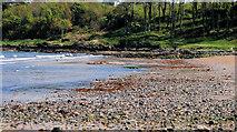 J4682 : The shore at Crawfordsburn (4) by Albert Bridge